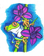 Red Eye Drawings - Friendly Frog by Amanda Machin