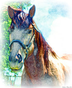 Forelock Photo Posters - Friendly Horse Digital effect Poster by Debbie Portwood