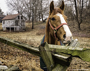 Split Rail Fence Prints - Friendly Horse Print by Fran Gallogly