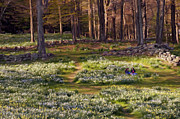 Spring Scenes Digital Art Metal Prints - Friends Metal Print by Bill  Wakeley