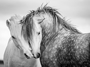 Equine Photo Posters - Friends II Poster by Tim Booth