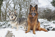 Wag Tail Prints - Friends In The Snow Print by Phil  Gough