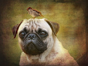 Friendly Digital Art - Friends like pug and bird by Barbara Orenya