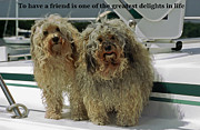 Cute Havanese Framed Prints - Friends Framed Print by Sally Weigand