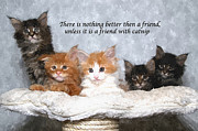 Kitten Prints Posters - Friendship Poster by Allen Beilschmidt