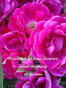 Affirmation Posters - Friendship Roses Poster by Marla Hoover