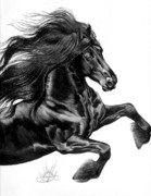 Horse Images Drawings Posters - Friesian Poster by Cheryl Poland
