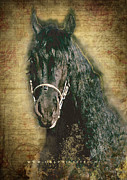 The Horse Mixed Media Posters - Friesian DIAMOND - a Portrait Poster by Graphicsite Luzern