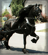 Owner Digital Art Posters - Friesian Driving Poster by Royal Grove Fine Art
