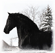 Friesian Posters - Friesian Magnificence Poster by Royal Grove Fine Art