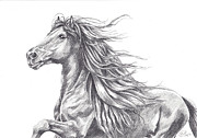 Escape Drawings Metal Prints - Friesian Power Metal Print by Kate Black