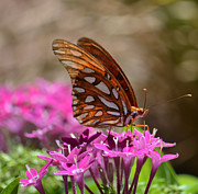 Ruth Housley Metal Prints - Fritillary Butterfly Metal Print by Ruth  Housley