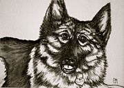German Shepard Dog Prints - Fritz Print by Pete Maier