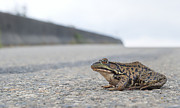 Paul W Sharpe Aka Wizard of Wonders - Frog Crossing the Road