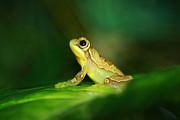 Frog Dreams Print by Paul Slebodnick