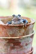 Webbed Framed Prints - Frog in a Pot Framed Print by Tim Gainey