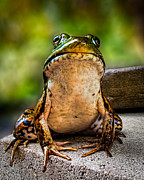 Frog Prince Or So He Thinks Print by Bob Orsillo