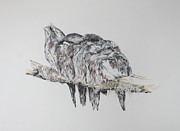 Fauna Originals - Frogmouth Dreams II by Leonie Bell