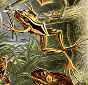 Amphibians Digital Art Metal Prints - Frogs detail Metal Print by Unknown