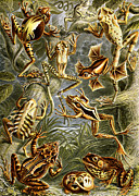 Amphibians Digital Art Metal Prints - Frogs Frogs and More Frogs Metal Print by Unknown