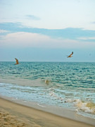 Flying Seagulls Art - Frolic by Colleen Kammerer