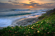 La Jolla Prints - From Above Print by Peter Tellone
