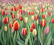 Purple Tulip Paintings - From The Natures Palette by Kiril Stanchev