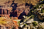 Point Park Mixed Media Posters - From Yaki Point 1 Grand Canyon Poster by Nadine and Bob Johnston