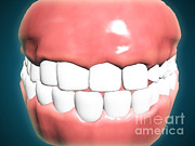 Front View Digital Art Framed Prints - Front View Of Human Mouth With Teeth Framed Print by Stocktrek Images