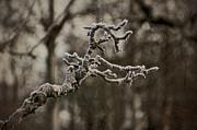 Frost Dragon Print by Odd Jeppesen