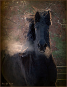 Friesian Horse Framed Prints - Frost Framed Print by Fran J Scott