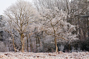 Winter Photos Posters - Frost on Trees Wall Art Poster by Natalie Kinnear