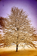 Marty Koch  Metal Prints - Frosted Branches Metal Print by Marty Koch