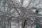 Lindy Whiton - Frosted Cherry Tree