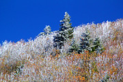Danielle Smith Metal Prints - Frosted Mountain Top Metal Print by Danielle Smith