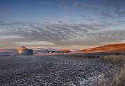 North Idaho Posters - Frosted Palouse Poster by Idaho Scenic Images Linda Lantzy