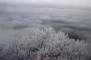 Michael Eingle - Frosted Tree Top Over...