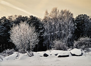 Frosted Trees Print by Vladimir Kholostykh