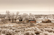 Kitty Cat Prints - Frosty Farm Print by Paul Bartoszek