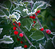 Chanda Henne Posters - Frosty Holly Poster by Chanda Henne