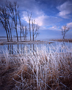 Glacial Park Framed Prints - Frosty Morning Framed Print by Ray Mathis