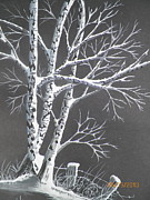 Snowy Trees Drawings - Frosty Night by Wolfgang Pranke