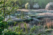 Frost Photos - Frosty Spring Morning by Bill  Wakeley