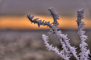 Frost Photos - Frosty the Twig  by Rob Hawkins