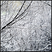 Frozen Branches Posters - Frozen Branches Poster by Bonnie Bruno