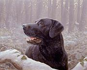 Black Lab Puppy Paintings - Frozen Breath by John Silver