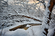 Snowed Trees Prints - Frozen Creek Print by Sebastian Musial