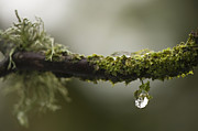 Dangling Prints - Frozen Droplet Print by Anne Gilbert