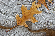 Abstracts - Frozen Leaf # 2 by Tom and Pat Cory