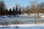 Snowmageddon Prints - Frozen Pond Print by Carolyn Stagger Cokley